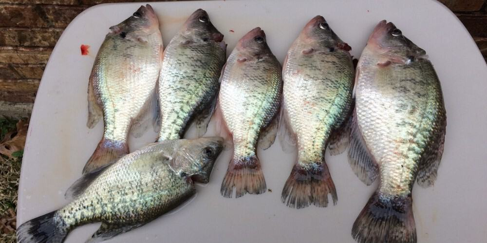 How To Clean Crappies